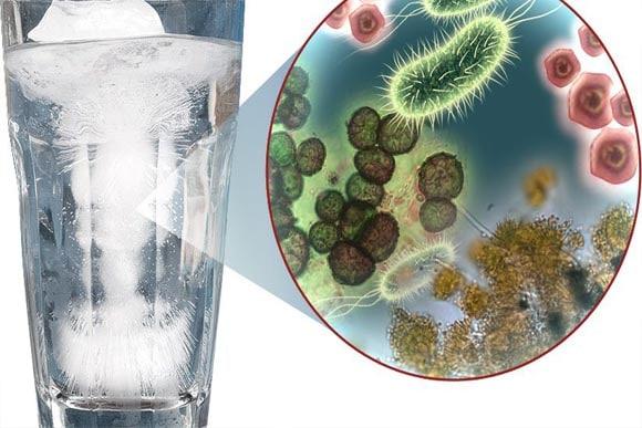 bacteria-in-water